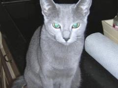 Eva met de mooie ogen
