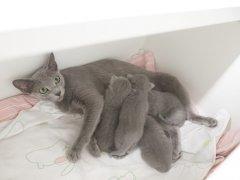 Graciella als kitten