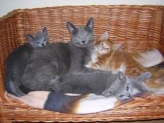 dscn0867_anna__kittens__thora_2