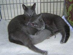 anna_silver_en_kittens_dscn11382