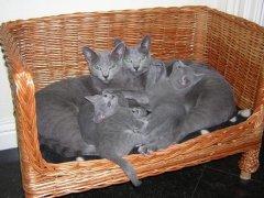 silver_anna_en_kittens_dscn11442