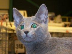 kattenshow_gorrendijk_18_oktober_2009_0162