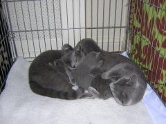 anna_silver_en_kittens_dscn1140