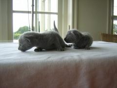 kittens_anna_dscn11262