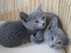 2_kittens_0125_verkleind