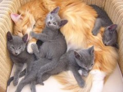 beppie_met_kittens_eva_1_verkleind