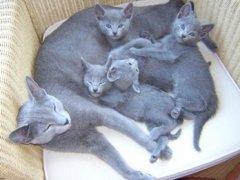 eva_met_kittens_in_de_stoel_verkleind