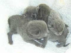 kittens_febr_2007_in_de_mand_verkleind_3