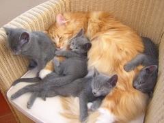 beppie_met_kittens_eva_2_verkleind