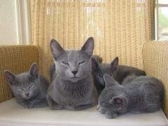 eva_met_kittens_in_de_stoel_8_weken_verkleind