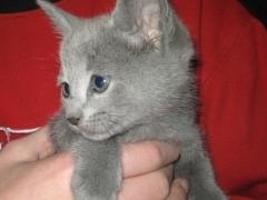 kitten_op_de_arm_verkleind