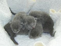 kittens_febr_2007_in_de_mand_verkleind
