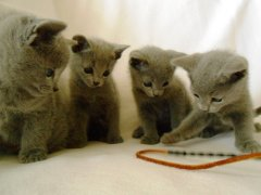 kittens_from_divo_and_fatimah_068_klein