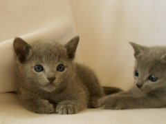 kittens_from_divo_and_fatimah_120_klein