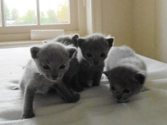kittens_from_divo_and_fatimah_009_klein