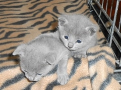 kittens_from_divo_and_fatimah_012_klein