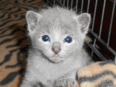 kittens_from_divo_and_fatimah_014_2_klein