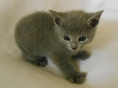 kittens_from_divo_and_fatimah_036_klein