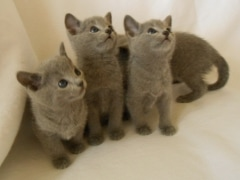 kittens_from_divo_and_fatimah_055_klein