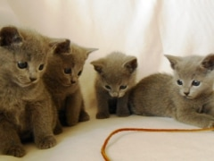 kittens_from_divo_and_fatimah_071_klein