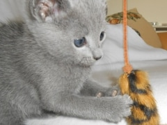 kittens_from_divo_and_fatimah_097_klein