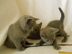 kittens_from_divo_and_fatimah_123_klein