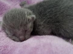 kittenfotos_klein