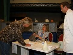 Show in Gorredijk 2008