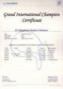 Grand International Champion certificaat Djagilevs Ruses d'Amour.jpg