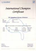 International Champion certificaat Djagilevs Ruses d'Amour.jpg