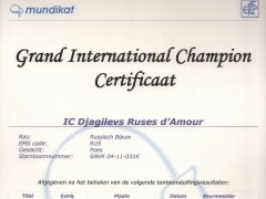 Grand International Champion certificaat Djagilevs Ruses d'Amour.jpg