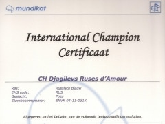 International Champion certificaat Djagilevs Ruses d'Amour.jpg