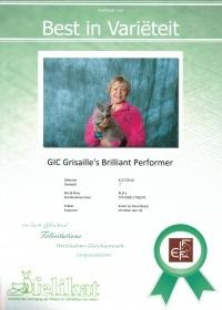 Best in Varieteit Grisaille's Brilliant Performer.jpg