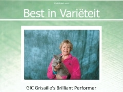 Best in Varieteit Grisaille's Brilliant Performer.jpg
