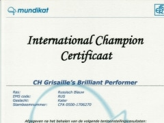 IC certificaat Brilliant.jpg