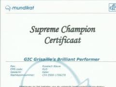 Supreme Champion Certificaat Brilliant.jpg