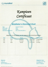 Champion certificaat Diamond Dust.jpeg