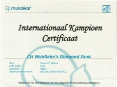 International Champion certificaat Diamond Dust