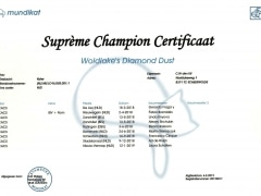Supreme Champion certificaat
