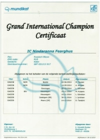 Groot Internationaal Kampioens certificaat Fearghus