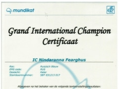 Groot Internationaal Kampioens certificaat Fearghus