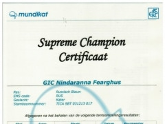 Supreme Champion certificaat Fearghus.jpeg