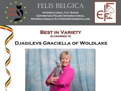Best in Varieteit Djagilevs Graciella 1-12-2013.jpg