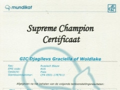 Certificaat Supreme Champion.jpeg