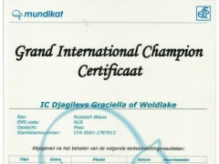 Groot Internationaal Kampioencertificaat Graciella.jpeg