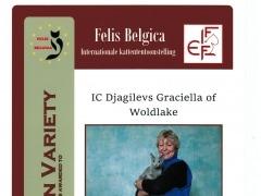 november 2014 BIV Felis Belgica.jpeg