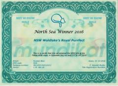 North Sea Winner certificaat.jpeg