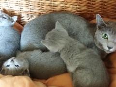 Kittens van Woldlake's d'Jamilla