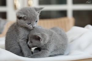 Kittens Izzie