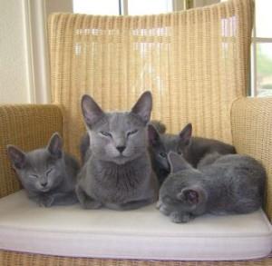 Djagilevs Rustaveli met haar kittens